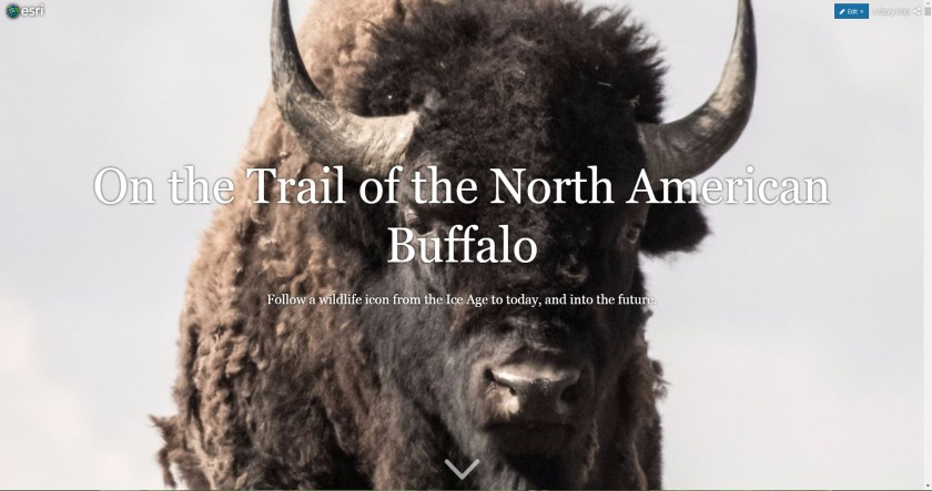 Cover image for a Story Map, with a title and buffalo staring out from the screen.