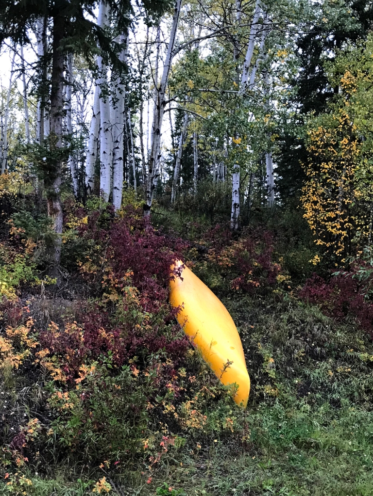 A deep yellow canoe lies hull upward among green, maroon, and yellow shrubs beneath an aspen forest.