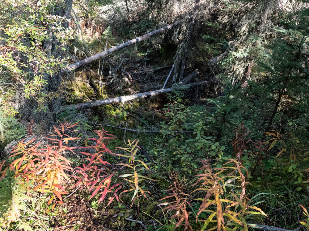 Fireweed and shrubs hang over a sinkhole where the trunks of fallen trees lay.