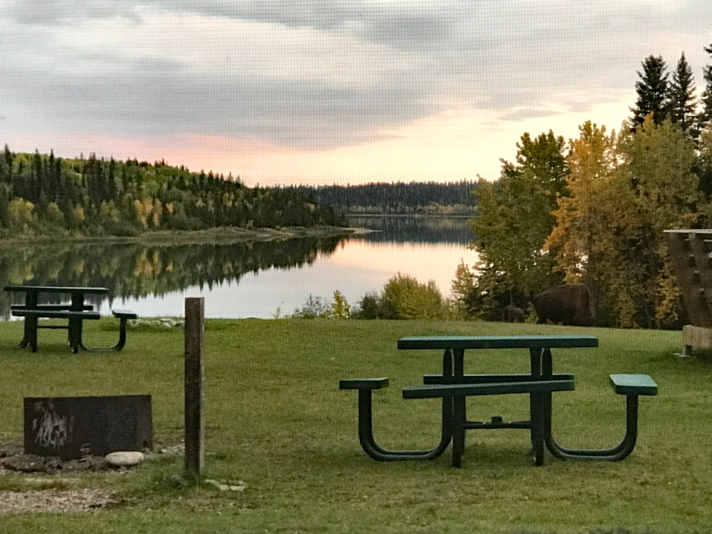 A view of a picnic table, firepit, and long Pine Lake over the grassy knoll outside my cabin. A bison bull grazes the knoll by a line of trees fringing the lake.